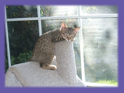 "Kitten sleeping ""Huntington Beach pet sitter"""